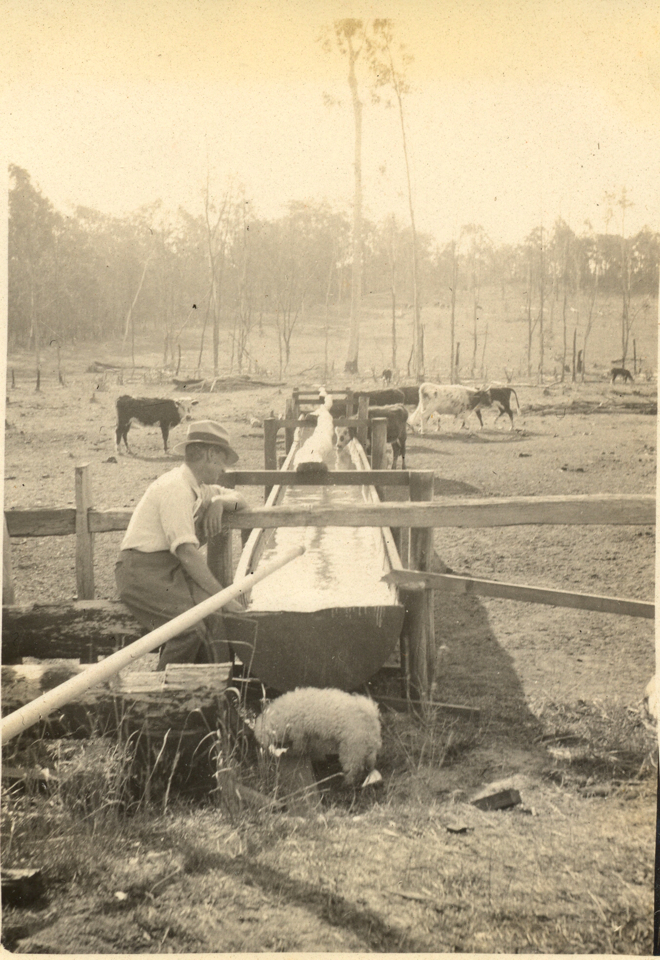 Water trough for cattle at Cherbourg c1935
