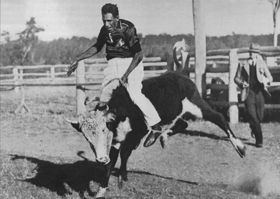 Steer riding at the annual Cherbourg Show 1959