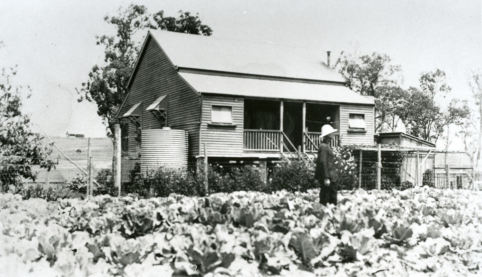 Cabbage garden at Barambah Aboriginal Settlement 1925