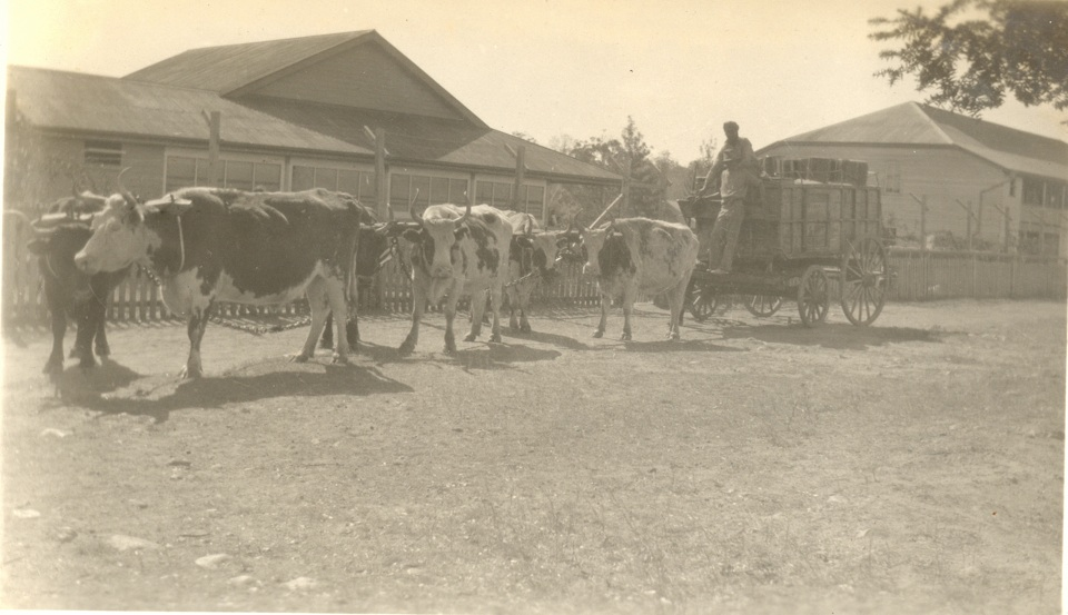 Goona Cart in front of the Mothers Quarters and the Girls Dormitory at Cherbourg c1930