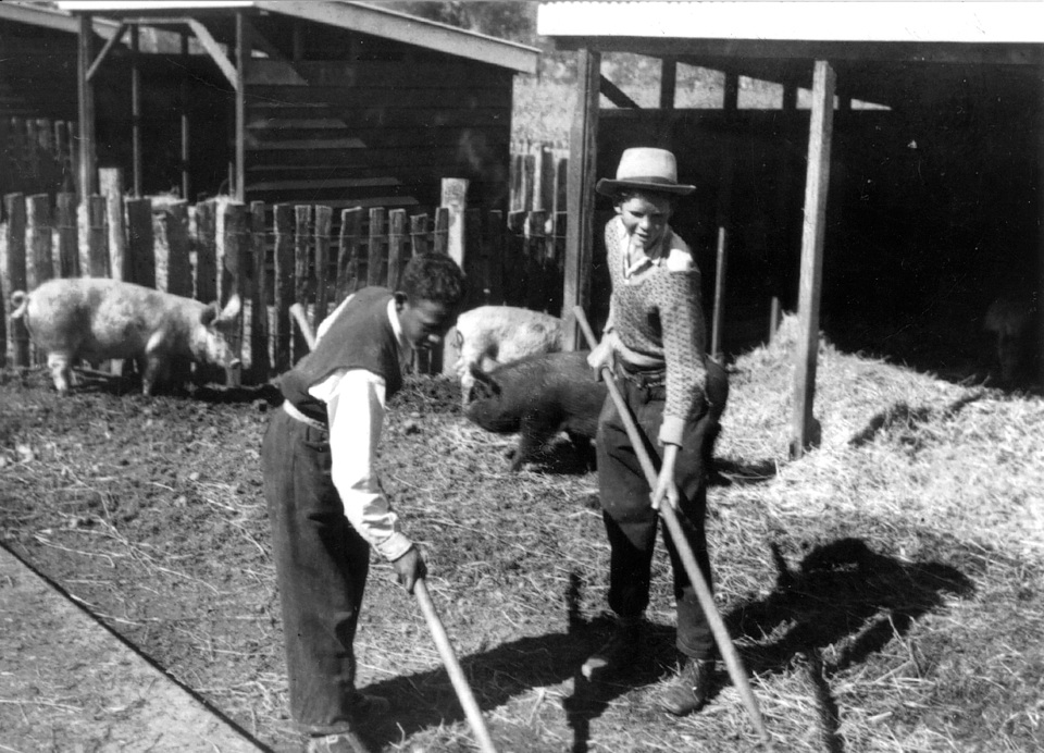 Learning farmwork at Cherbourg Training Farm 1948