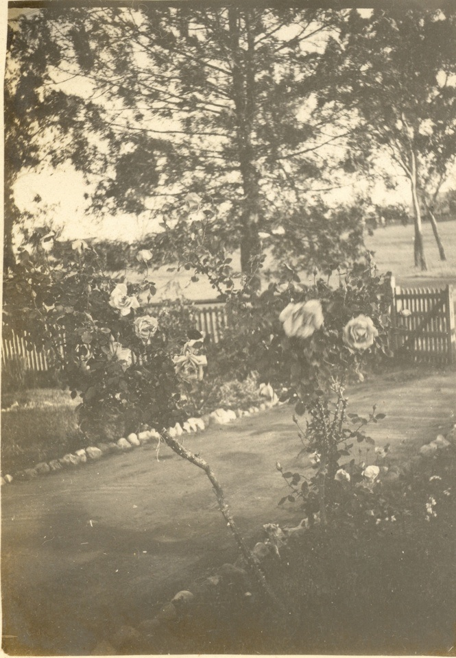 Roses in my little school yard Cherbourg Provisional School c1930s
